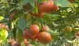 Hiệu quả vốn vay sản xuất nông nghiệp ở miền núi
