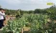 Lục Nam: Người dân giao nộp cây trồng chứa chất ma túy
