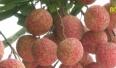Lục Ngạn nâng cao giá trị sản xuất bình quân trên 1ha đất nông nghiệp