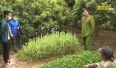 Lục Ngạn phát hiện nhiều vụ việc trồng cây có chứa chất ma túy