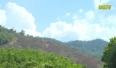 Sơn Động: Phá rừng, 3 cá nhân bị xử phạt