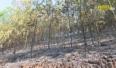 Tăng cường phòng chống cháy rừng mùa hanh khô