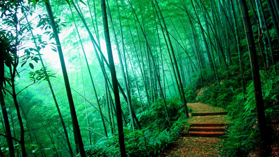 Truyện ngắn: Gió rừng