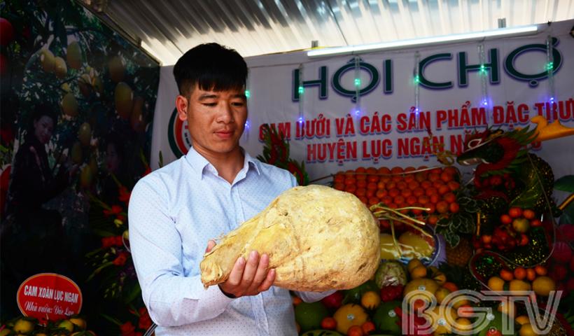 """Củ đậu """"khổng lồ"""" của xã Kiên Lao mang tới hội chợ khiến nhiều người thích thú."""