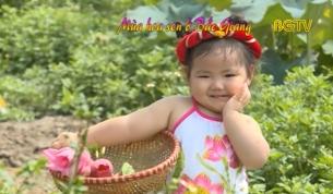 Mùa hoa sen ở Bắc Giang