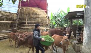 CTT: Tập trung các biện pháp phòng chống dịch bệnh và đói rét cho đàn vật nuôi