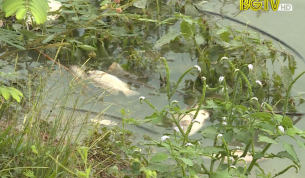 Nước sông Cầu tiếp tục bị ô nhiễm