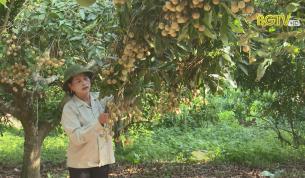 Phát triển cây ăn quả - Nâng cao hiệu quả kinh tế vườn đồi