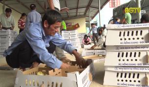 Sơn Động: Hỗ trợ giúp dân thoát nghèo