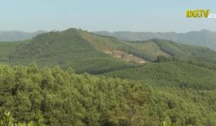 Tăng cường quản lý, bảo vệ rừng dịp giáp Tết