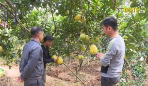 Tạp chí NNNT: Bắc Giang triển khai Đề án sản xuất nông nghiệp hữu cơ