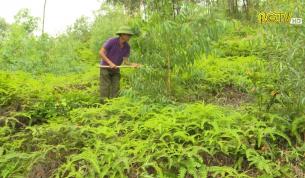 Tạp chí NNNT: Phòng cháy rừng mùa khô hanh
