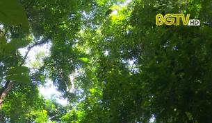 Xây dựng Đảng: Vai trò của cấp ủy Đảng trong bảo vệ rừng