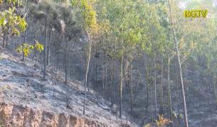 Yên Dũng: Khởi tố đối tượng gây ra cháy rừng