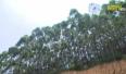 Sẽ bàn giao toàn bộ rừng đặc dụng cho BQL Khu du lịch Suối Mỡ