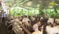 Yên Thế phát triển nông nghiệp hàng hóa tập trung