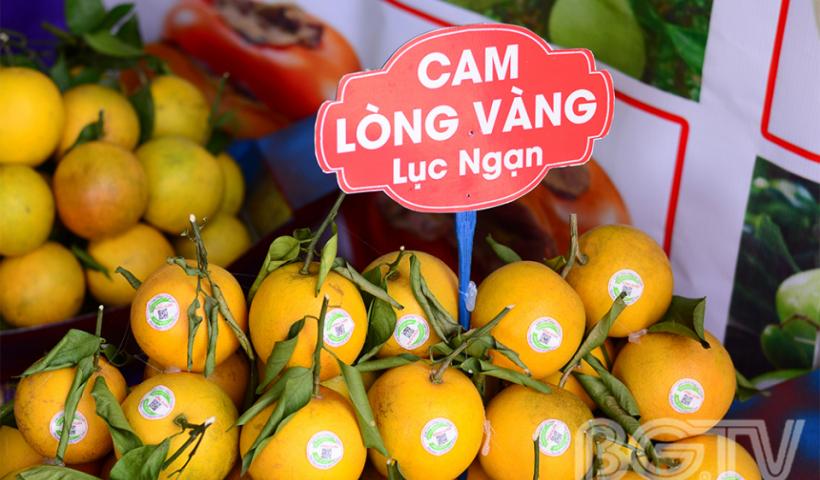Cam lòng vàng - một sản phẩm cây có múi của huyện Lục Ngạn.