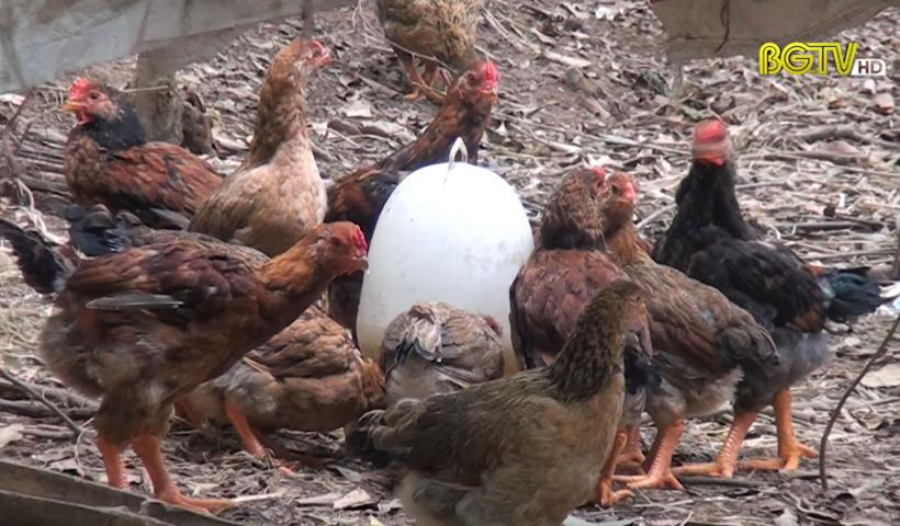 CTT: Tăng cường biện pháp phòng chống dịch bệnh trên đàn vật nuôi