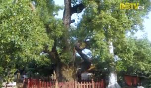 Cụm di tích cây dã hương Tiên Lục: Điểm đến du lịch hấp dẫn