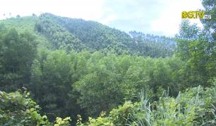 KHCN: Ứng dụng KHCN trong phát triển kinh tế rừng