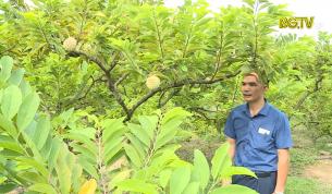 Tạp chí NNNT: Hiệu quả từ mô hình khuyến nông trên cây Na